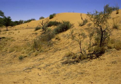Sanddünen im Osten Namibias