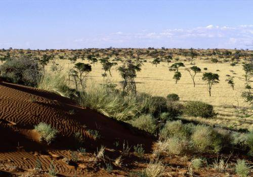 Sanddünen am Rande der Kalahari Wüste