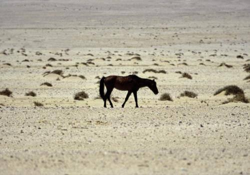 Wüstenpferd Nähe Lüderitz