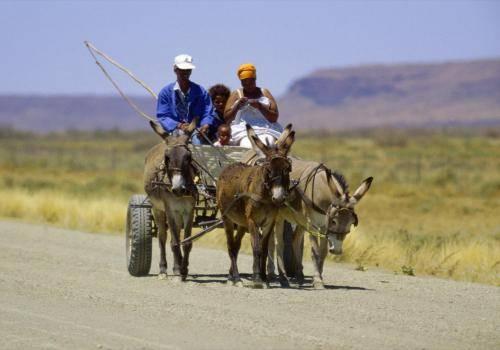 Damarafamilie mit Eselswagen