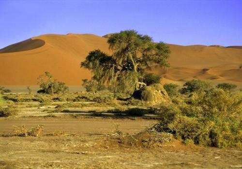 Wüstenlandschaft mit den größten Dünen der Welt