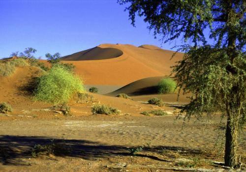 Die Namib Wüste mit den größten Dünen der Welt