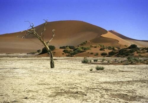 Sossusvlei  in der Namib Wüste im Naukluft Nationalpark, Namibia