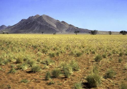Wüstenähnliche Landschaft