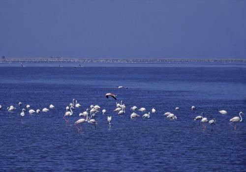 Flamingos in der Walfischbucht