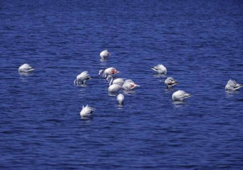 Flamingos in der Walfischbucht bei Swakopmund