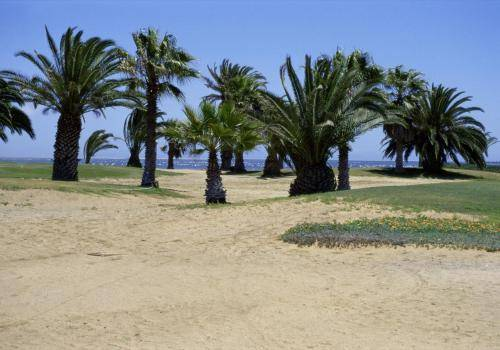 Palmenhain bei der Walvis Bay