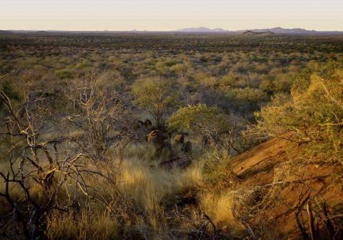 Afrikanische Buschlandschaft