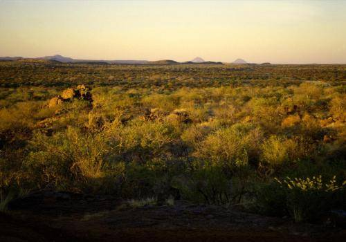 Afrikanische Buschlandschaft im Abendlicht