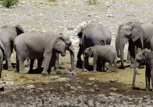 Elefantenfamilien an einer fast ausgetrockneten Wasserstelle