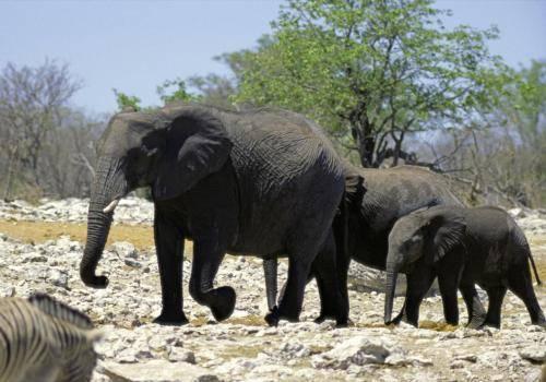 Elefantenfamilien