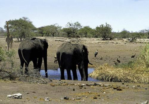 Elefanten an einer Wasserstelle im Etosha Nationalpark
