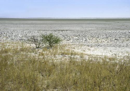 Große Salzpfanne im Etoscha Nationalpark