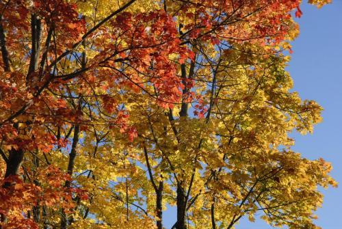 Herbstimpressionen rund um das Loisach Kochelsee Moor, Bayern