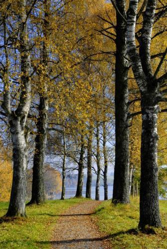 Wege zum Träumen.Herbststimmung am Staffelsee