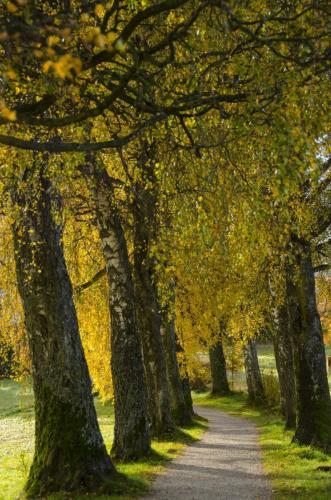 Stimmungsvolle herbstliche Wanderung bei Murnau