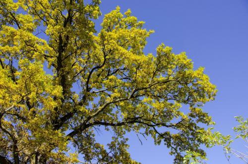 Baum mit spätsommerlicher Laubfärbung