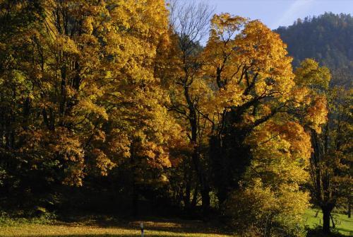 Baumgruppe mit herbstlicher Laubfärbung