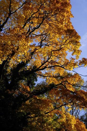 Baum mit herbstlicher Laubfärbung
