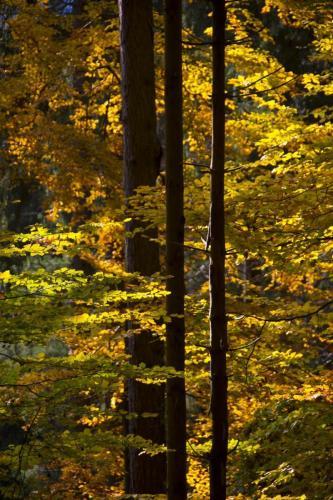 Lichtdurchfluteter herbstlicher Bergwald, Bayern