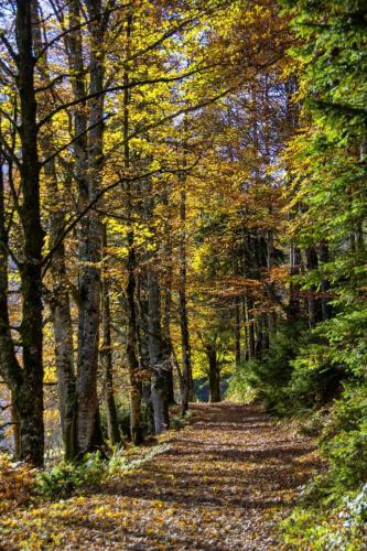Baumgruppen im Herbstlaub