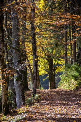 Baumgruppe im leuchenem Herbstlaub