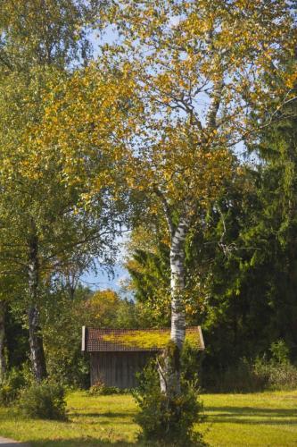 Herbstliche Stimmungen am Rande des Murnauer Mooses