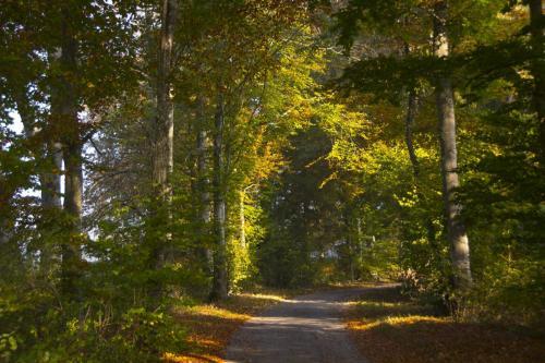 Lichtdurchflutete herbstliche Baumgruppe, Bayern
