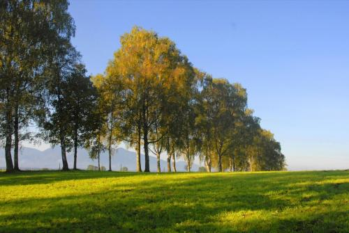 Birkenbaumgruppe