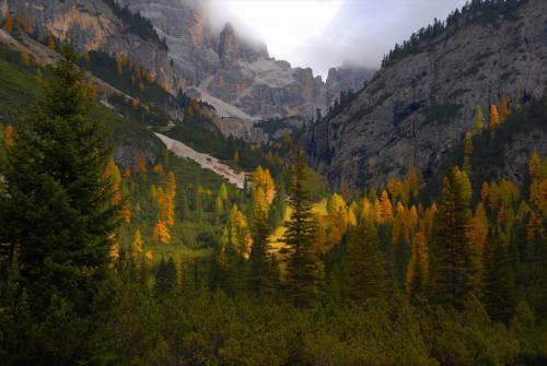 Leuchtende Lerchenwälder