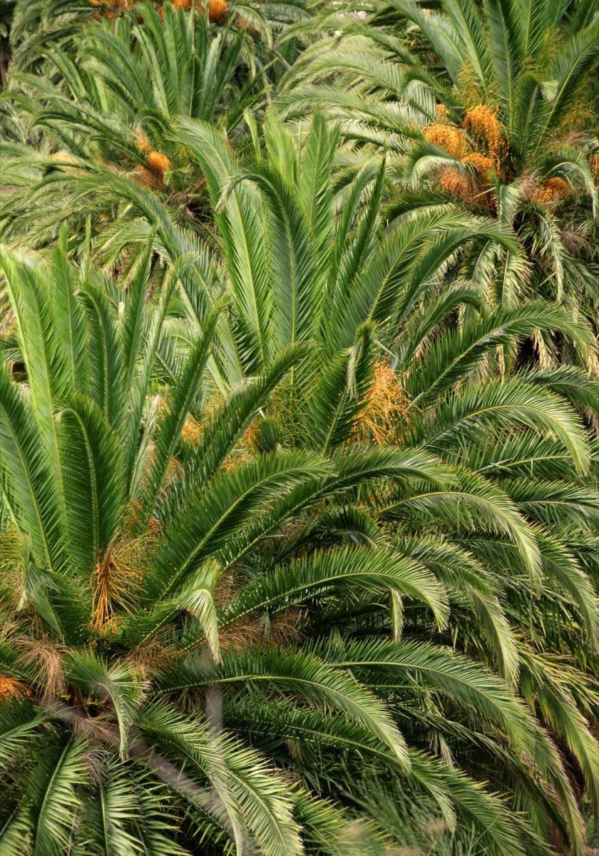 Palmwedeln