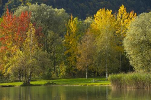 Herbstliche Parklandschaft am Kochelsee im Alpenvorland