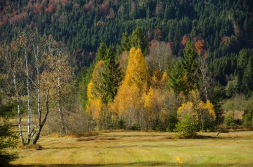 Ammertaler Moorlandschaft