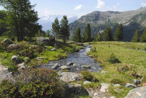 Gebirgsbach im Val Venezia
