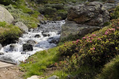 Wildbach in traumhafter Gebirgslandschaft
