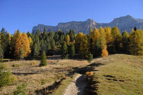 Spätherbstliche Bergwälder