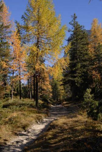 Leuchtende Lärchenwälder