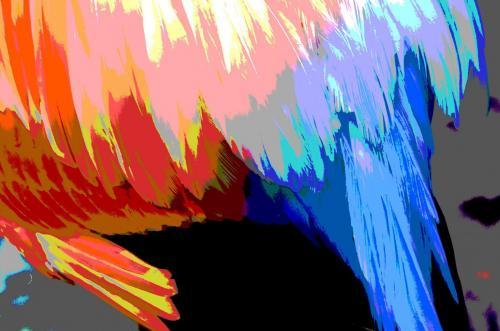Flamingofedern im  Farbenrausch