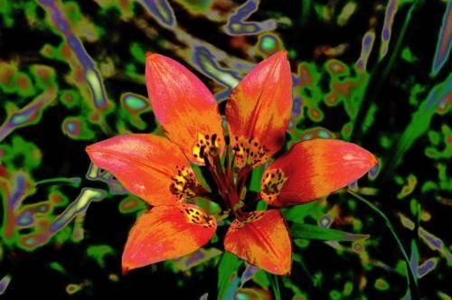Blumenimpressionen