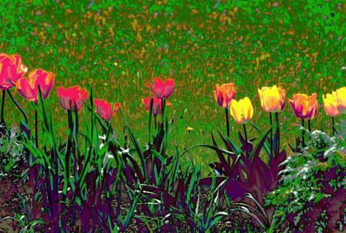 Tulpenimpressionen