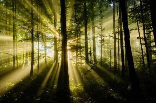 Lichtspiele im Bergwald
