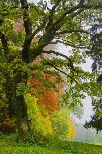 Laubbaum Impressionen im Herbst