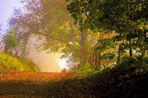 Frühnebelstimmung im Spätherbst, der Weg zum Licht