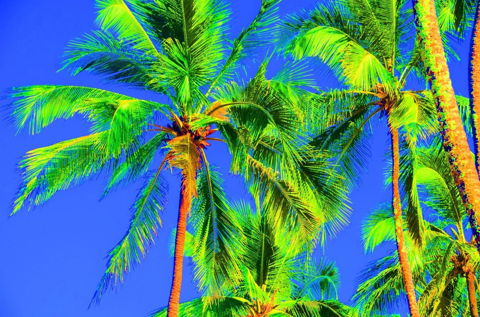 Palmenträume