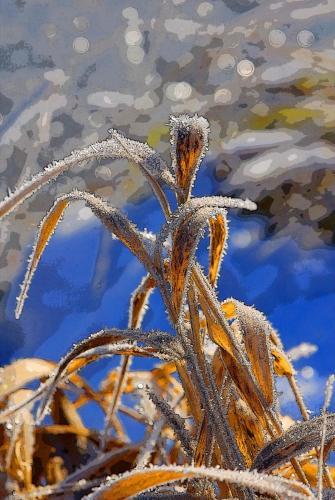 Eisiges Kunstwerk in der Natur