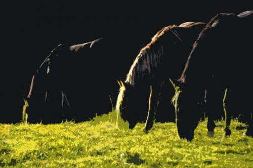Morgenstimmung mit Pferden im Voralpenland