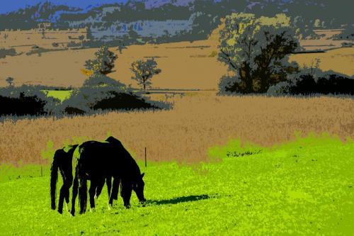Pferde im Murnauer Moos