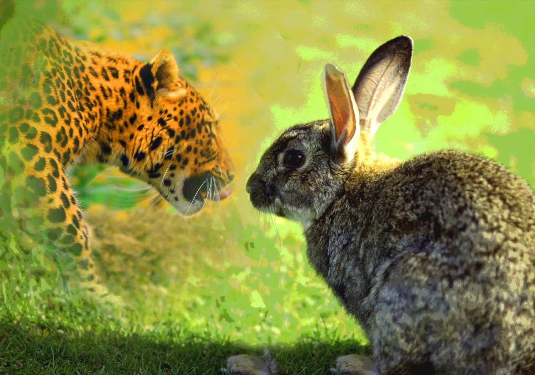 Das Kaninchen und der Leopard