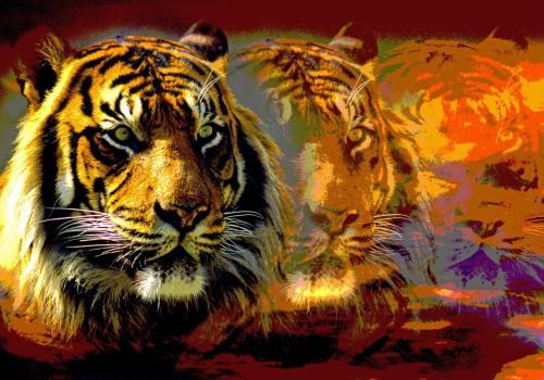 Tigerträume