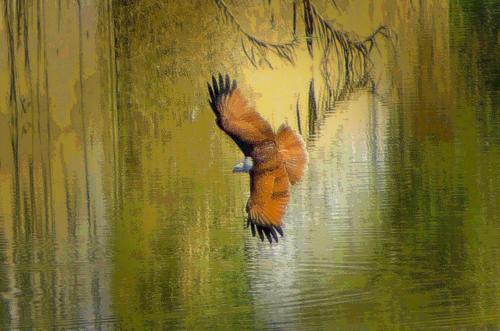 Der flug des Adlers